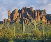 Tim Fitzharris - Saguaro cacti and Superstition Mountains, Lost Dutchman State Park, Arizona