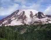 Tim Fitzharris - Mount Rainier with coniferous forest, Mount Rainier National Park, Washington