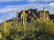 Tim Fitzharris - Saguaro cacti and Superstition Mountains at Lost Dutchman State Park, Arizona