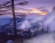 Tim Fitzharris - Rolling fog on Clingman's Dome, Great Smoky Mountains National Park, Tennessee