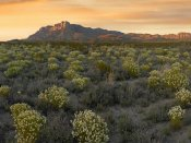 Tim Fitzharris - Pepperweed meadow beneath El Capitan, Guadalupe Mountains National Park, Texas