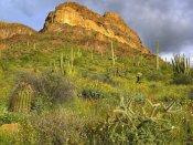 Tim Fitzharris - Organ Pipe Cactus Organ Pipe Cactus National Monument, Sonoran Desert, Arizona