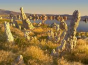 Tim Fitzharris - Wind and rain eroded tufa towers amid Squirreltail Barley Mono Lake, California