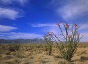 Tim Fitzharris - Ocotillo and the Vallecito Mountains, Anza-Borrego Desert State Park, California