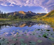 Tim Fitzharris - Lily Pads and reflection of Snowdon Peak in pond, west Needle Mountains, Colorado