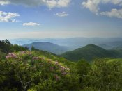 Tim Fitzharris - Rhododendron tree flowering at Craggy Gardens, Blue Ridge Parkway, North Carolina
