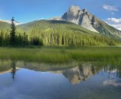 Tim Fitzharris - Mt Burgess reflected in Emerald Lake, Yoho National Park, British Columbia, Canada