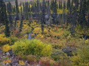 Tim Fitzharris - Beaver pond amid boreal forest, Tombstone Territorial Park, Yukon Territory, Canada