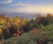 Tim Fitzharris - Deciduous forest in autumn, Blue Ridge Mountains from Doughton Park, North Carolina