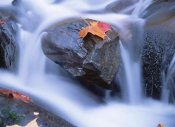 Tim Fitzharris - Autumn leaf on boulder, Little River, Great Smoky Mountains National Park, Tennessee