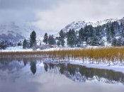 Tim Fitzharris - Reeds growing through frozen surface of June Lake, eastern Sierra Nevada, California