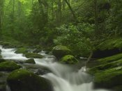 Tim Fitzharris - Roaring Fork River flowing through the Great Smoky Mountains National Park, Tennessee