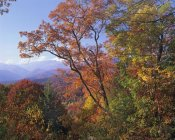 Tim Fitzharris - Deciduous forest in autumn, Blue Ridge Parkway, Great Smoky Mountains, North Carolina
