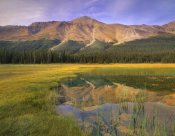 Tim Fitzharris - Observation Peak and coniferous forest reflected in pond, Banff National Park, Alberta