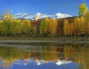 Tim Fitzharris - Full moon over East Beckwith Mountain rising above fall colored Aspen forests, Colorado