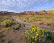 Tim Fitzharris - Wildflowers growing along dirt road, Temple of the Moon, Capitol Reef National Park, Utah