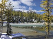 Tim Fitzharris - Boreal forest in light snow, Opabin Plateau, Yoho National Park, British Columbia, Canada