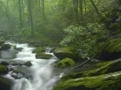 Tim Fitzharris - Roaring Fork River flowing through forest in Great Smoky Mountains National Park, Tennessee