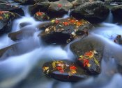 Tim Fitzharris - Autumn leaves on wet boulders in stream, Great Smoky Mountains National Park, North Carolina
