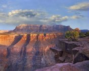 Tim Fitzharris - Sandstone cliffs and canyon seen from Toroweap Overlook, Grand Canyon National Park, Arizona