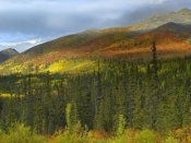 Tim Fitzharris - Boreal forest beneath Goldensides Mountain, Tombstone Territorial Park, Yukon Territory, Canada