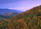 Tim Fitzharris - Appalachian Mountains ablaze with fall color, Great Smoky Mountains National Park, North Carolina