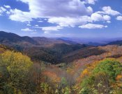 Tim Fitzharris - Deciduous forest in the autumn from Thunderstruck Ridge Overlook, Blue Ridge Parkway, North Carolina