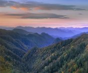 Tim Fitzharris - Deciduous forest covering mountains, Newfound Gap, Great Smoky Mountains National Park, North Carolina
