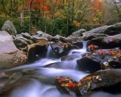 Tim Fitzharris - Little Pigeon River cascading among rocks and colorful Maple leaves, Great Smoky Mountains National Park, Tennessee