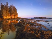 Tim Fitzharris - Tidepools exposed at low tide, Botanical Beach, Juan de Fuca Provincial Park, Vancouver Island, British Columbia, Canada