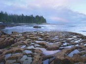 Tim Fitzharris - Tide pools exposed at low tide, Botanical Beach, Juan de Fuca Provincial Park, Vancouver Island, British Columbia, Canada