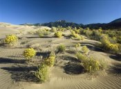 Tim Fitzharris - Flowering shrubs on the dune fields in front of the Sangre de Cristo Mountains, Great Sand Dunes National Monument, Colorado