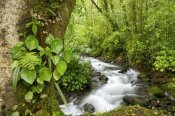 Steve Gettle - Creek flowing through rainforest, Costa Rica