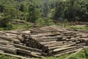 Thomas Marent - Logs in logging area, Danum Valley Conservation Area, Borneo, Malaysia