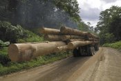 Thomas Marent - Truck with timber from a logging area, Danum Valley Conservation Area, Borneo, Malaysia