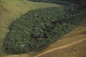 Mark Moffett - Patch of remnant rainforest surrounded by clearcut, Belo Horizonte, Atlantic Forest ecosystem, Brazil