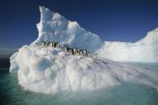 Colin Monteath - Adelie Penguin group on sculpted iceberg, Terre Adelie Land, east Antarctica