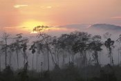 Pete Oxford - River edge at dawn, Lower Urubamba River, Amazon, Peru