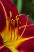 Andy Reisinger - Flower close up showing pistil and stamens, New Zealand