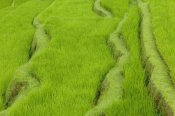 Cyril Ruoso - Terraced rice paddy, Ubud area, Bali, Indonesia