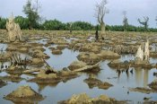 Cyril Ruoso - Mangrove in Mahakam Delta 80% destroyed in 2001 because of tiger shrimp farm, East Kalimantan, Indonesia