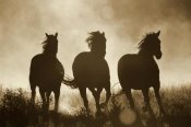 Konrad Wothe - Domestic Horse trio running at sunset, Oregon - Sepia