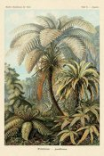 Ernst Haeckel - Haeckel Nature Illustrations: Ferns