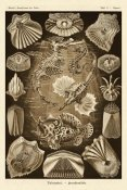 Ernst Haeckel - Haeckel Nature Illustrations: Teleostei, bony Fishes - Sepia Tint
