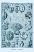 Ernst Haeckel - Haeckel Nature Illustrations: Talamophora, Formanifera, Rhisopods - Blue-Green Tint