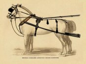 Unknown - Saddles and Tack: Double English Long-Tug Coach,Sport,Competition,Sports,Play,win,score Harness