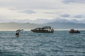 Flip Nicklin - Sperm Whale fluke and tourists watching from boat, New Zealand
