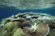 Flip Nicklin - Great Barrier Reef near Port Douglas, Queensland, Australia
