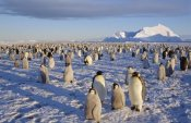 Tui De Roy - Emperor Penguin colony, Atka Bay, Weddell Sea, Antarctica