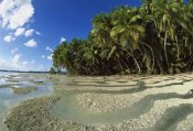 Tui De Roy - Palm trees and beach, Palmyra Atoll NWR, US Line Islands